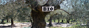 Экологически чистые оливки